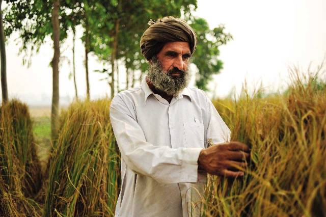 Agriculture_in_India,_Farmer_Punjab-WEB