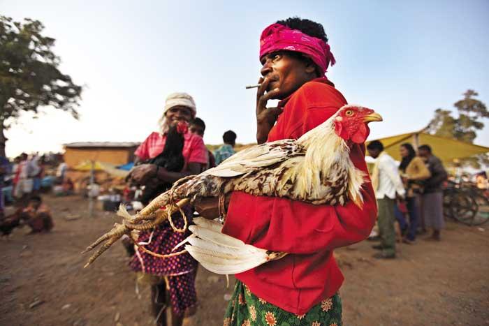 मुर्गा मालिक इन मुर्गों की विशेष देखभाल करते हैं