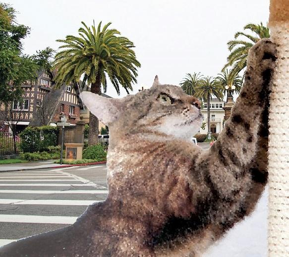 किस्सा खिसियानी बिल्ली का